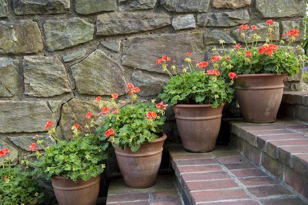 Flowerstairs